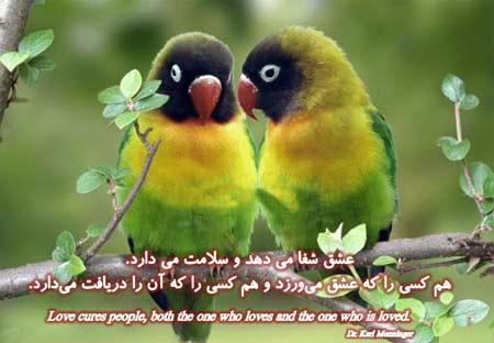 elham (3)