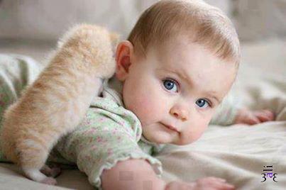 Фото Маленький рыжий котенок залезает на спину ребенка.