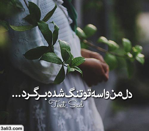 safar (9)