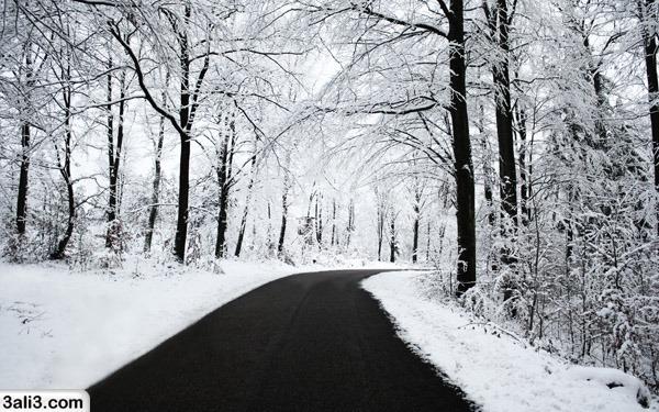 winter (12)