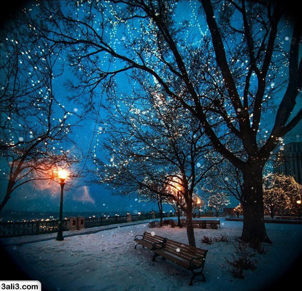 winter (15)