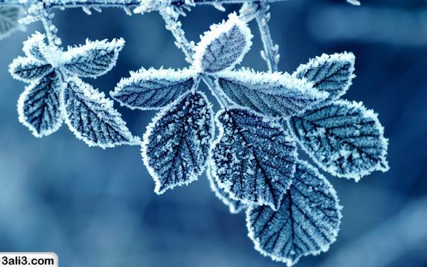 winter (23)