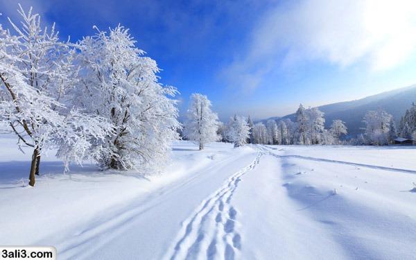 winter (26)