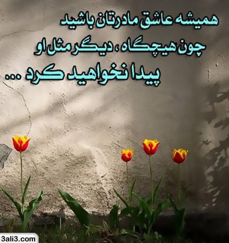 maadar (8)