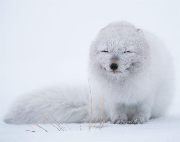 animal-smile (2)