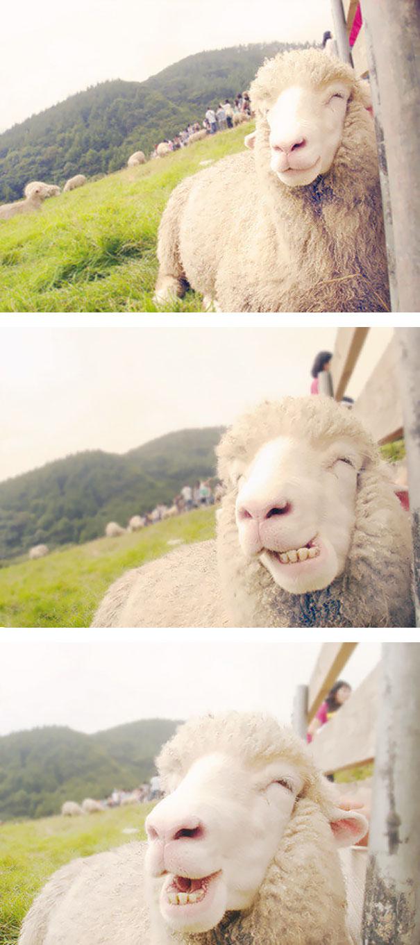 animal-smile (25)