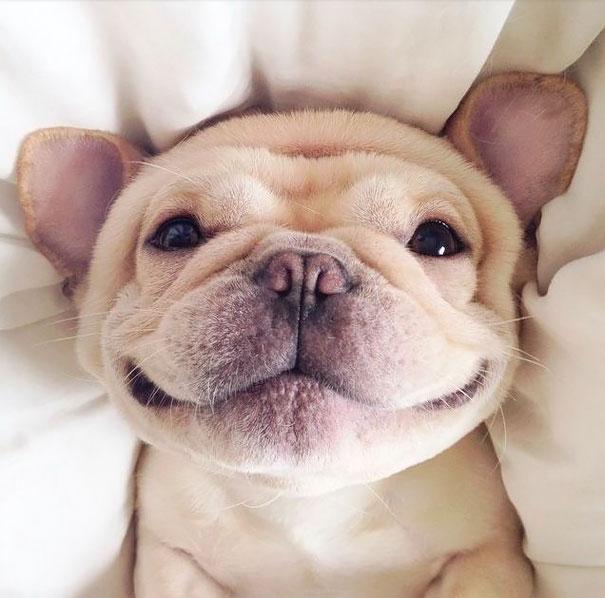 animal-smile (3)