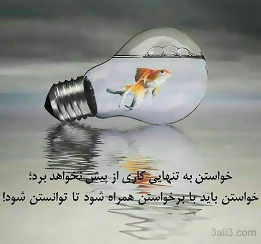 falsafi (13)