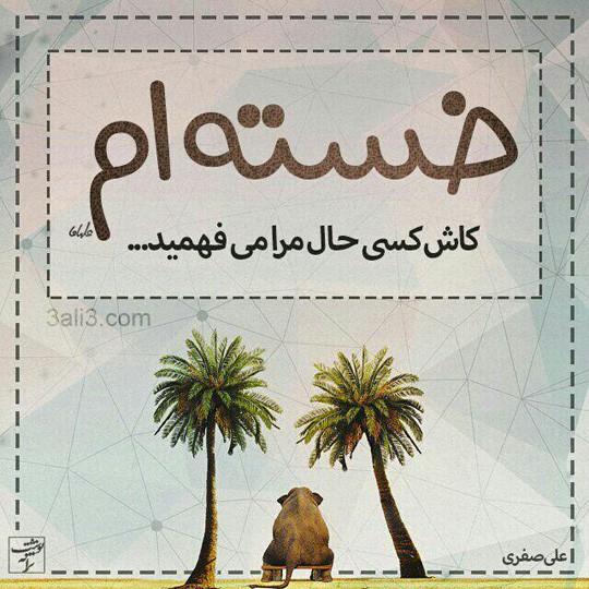 taraneh-graghy (1)