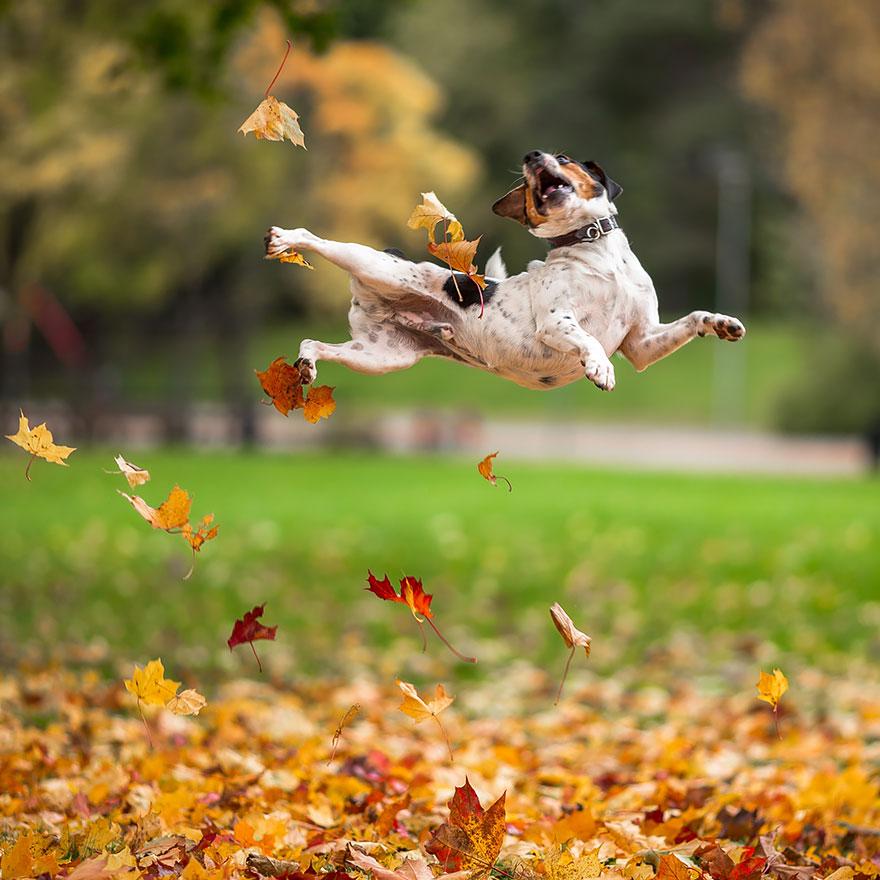 autumn-animals (1)