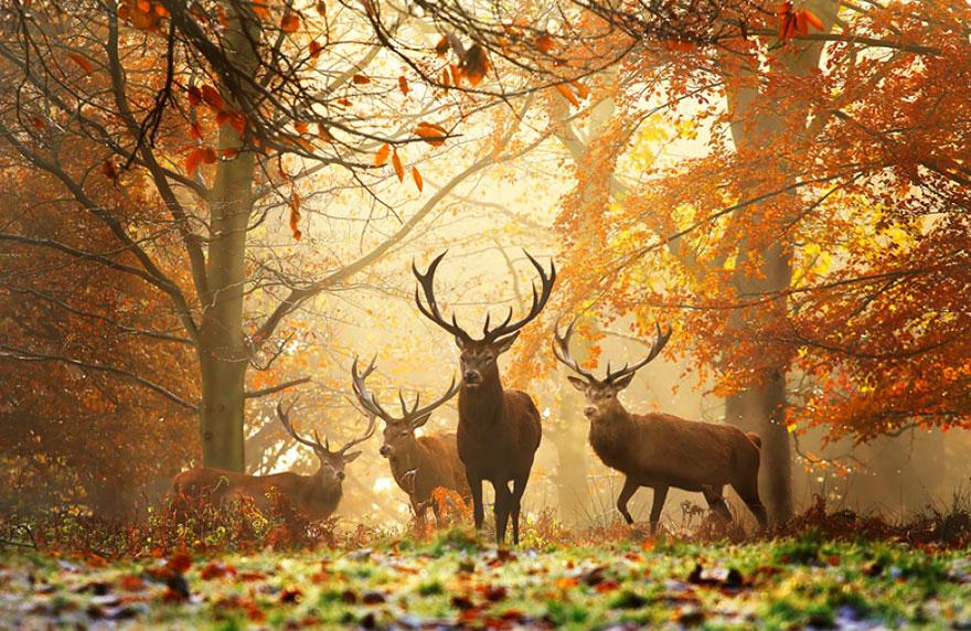 autumn-animals (10)