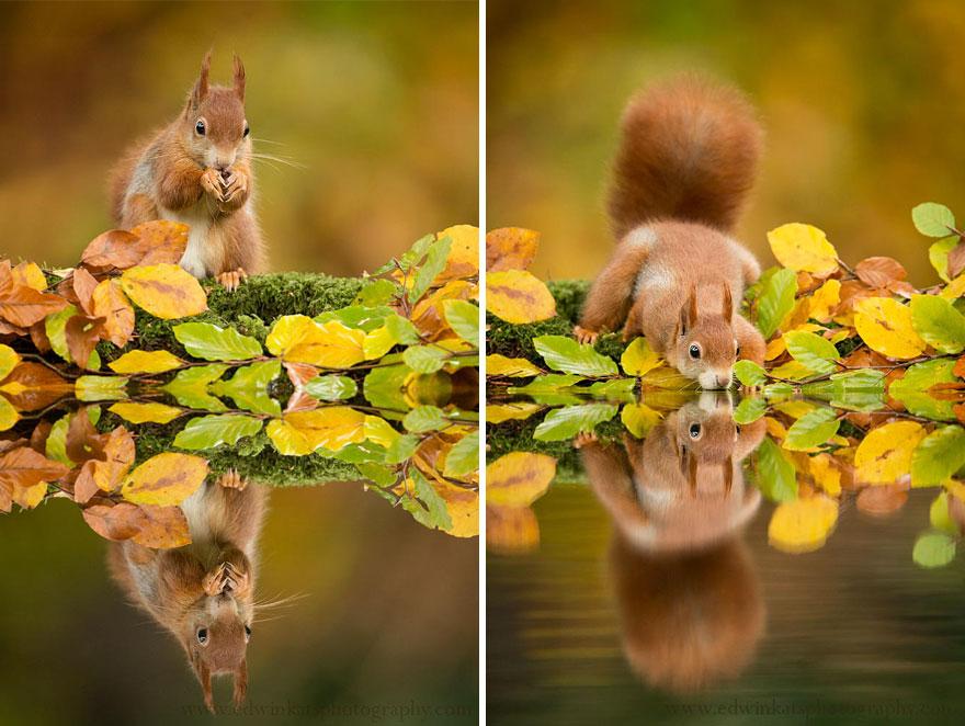 autumn-animals (11)