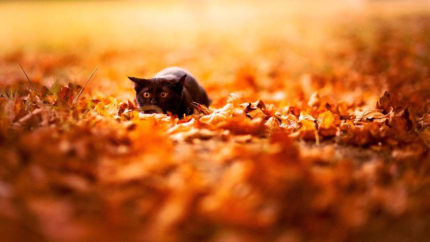 autumn-animals (12)