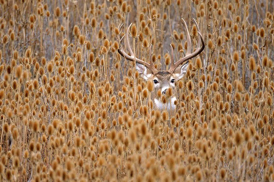 autumn-animals (13)