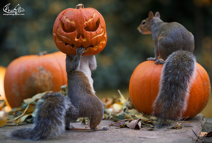 autumn-animals (14)