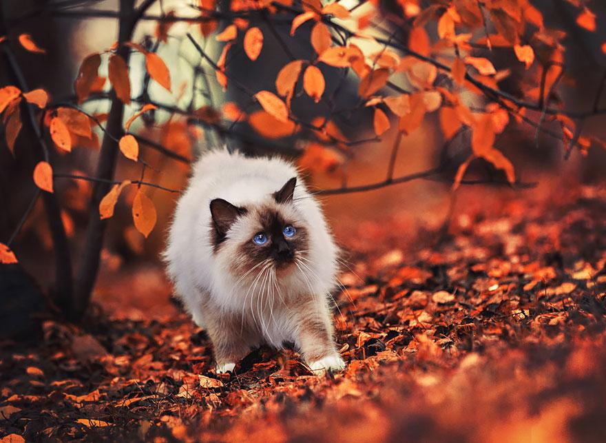 autumn-animals (2)