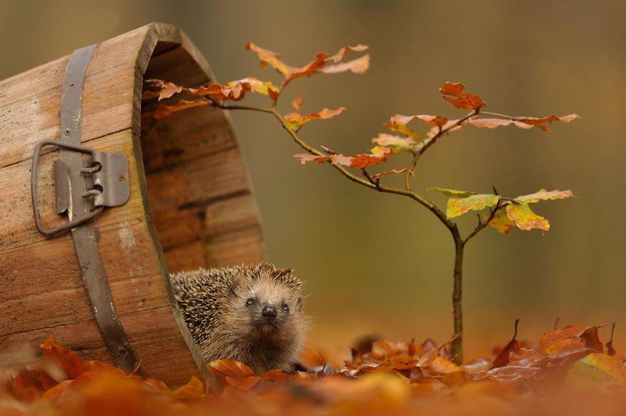 autumn-animals (6)