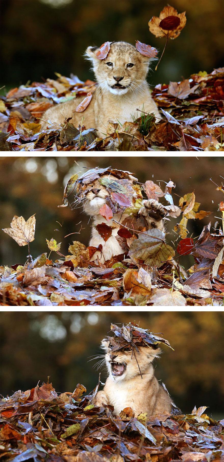 autumn-animals (7)