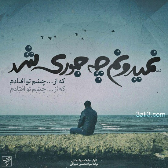 taraneh-graphy (16)