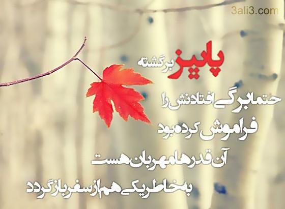 paeez (4)