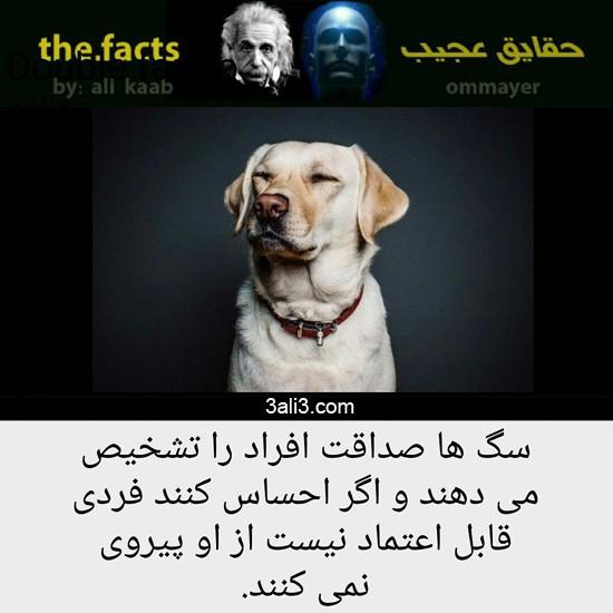 fact (5)