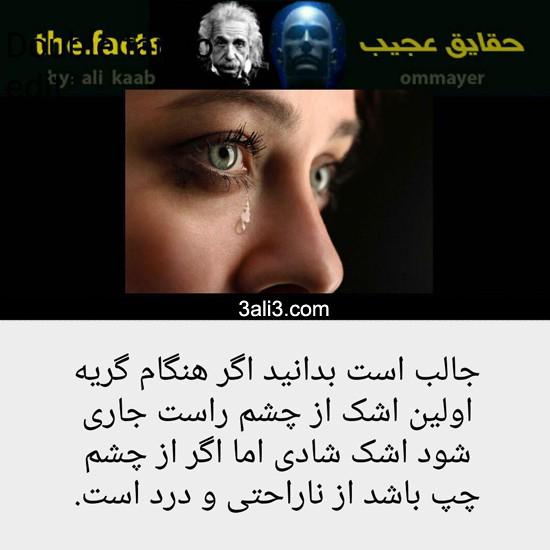 ajib (1)