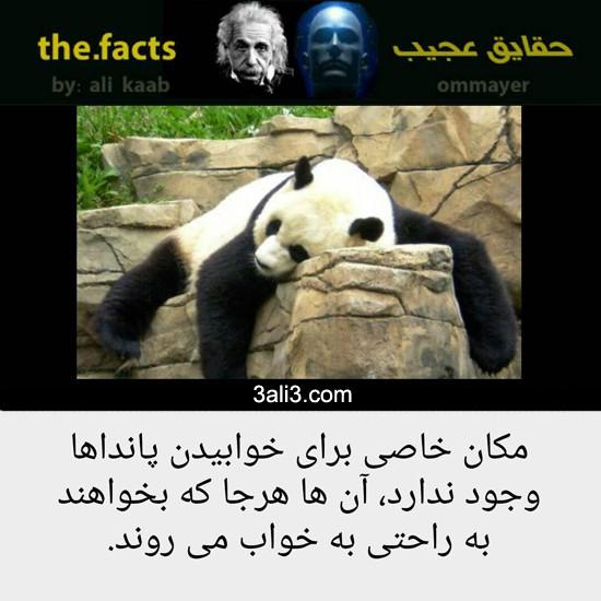 fact (17)