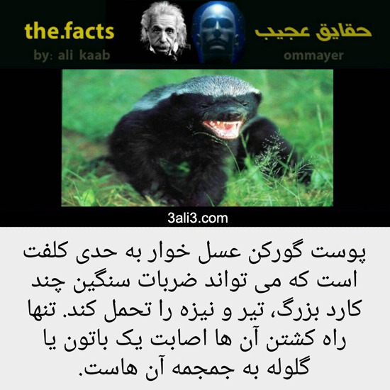 fact (12)