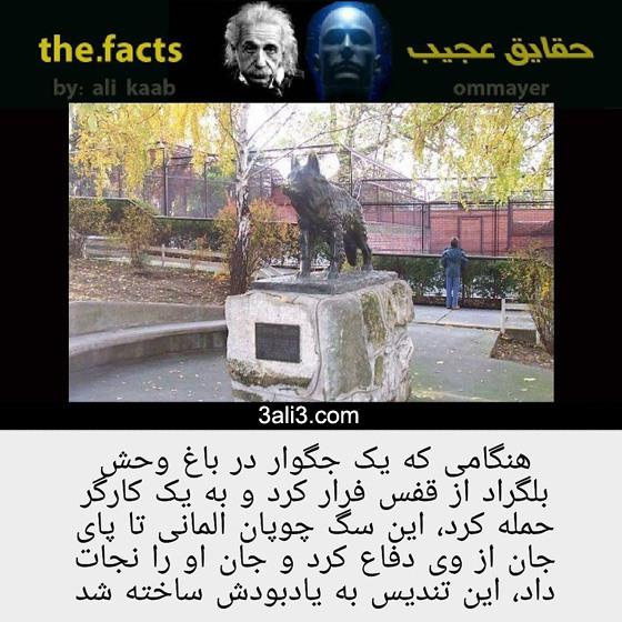 fact (6)