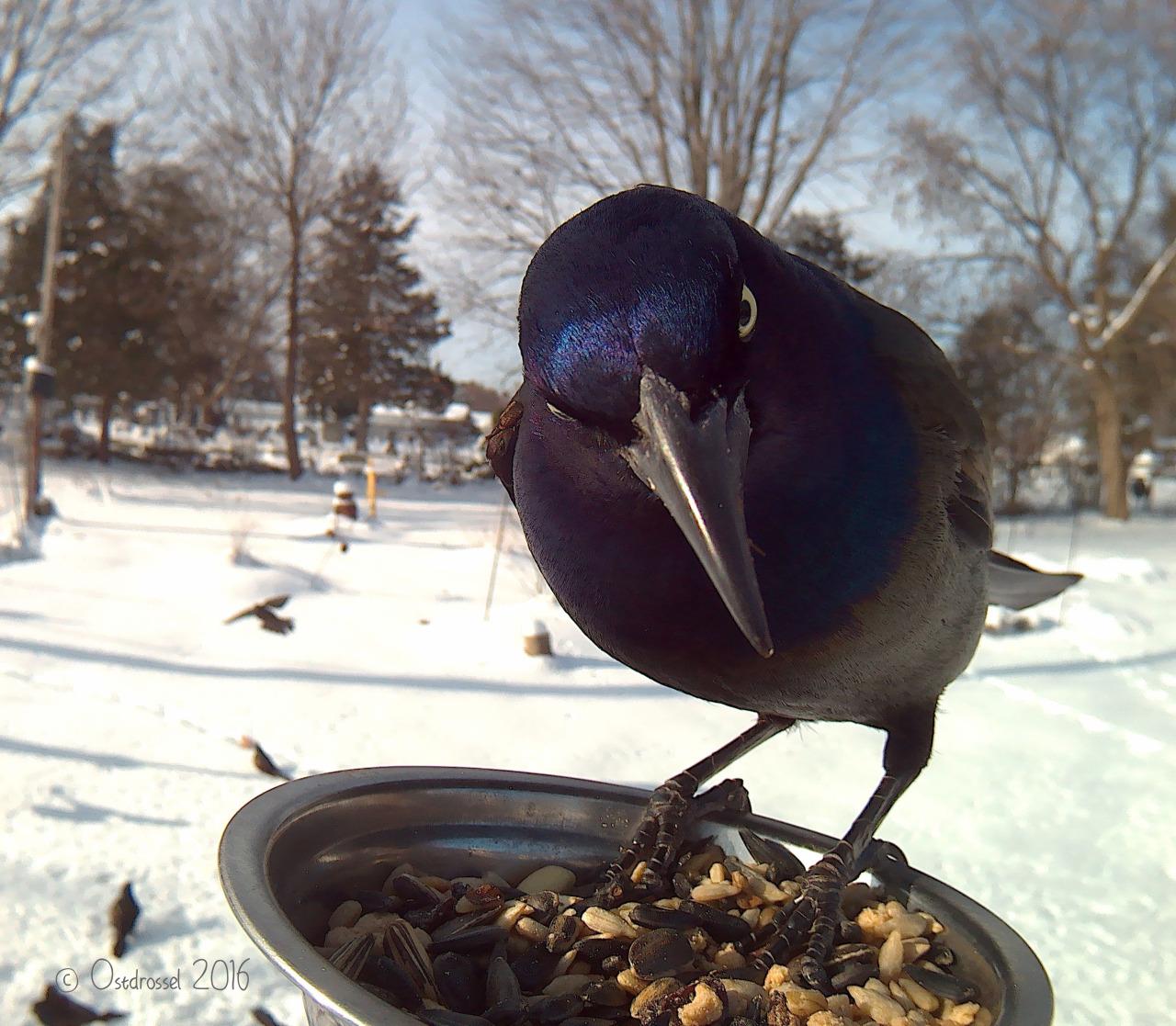 bird (6)