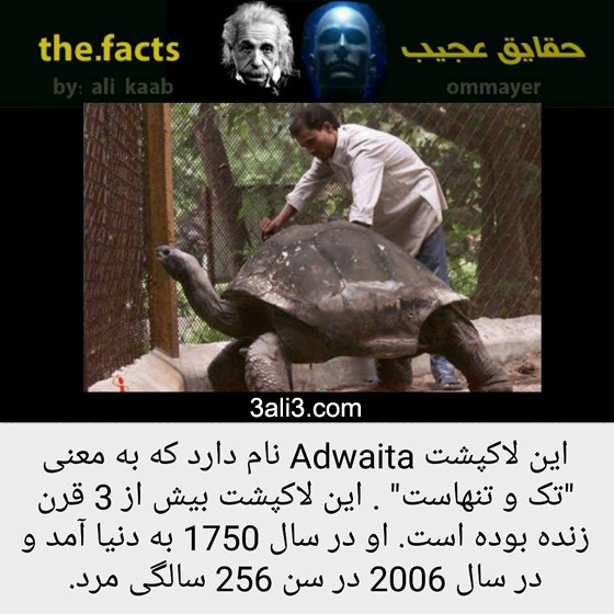 fact-new (12)