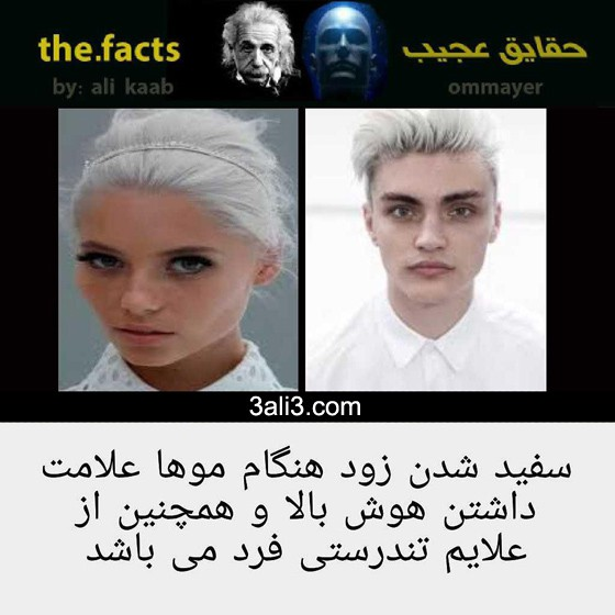 fact-new (14)