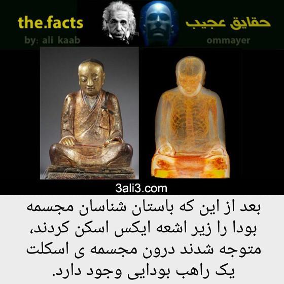 fact-new (7)