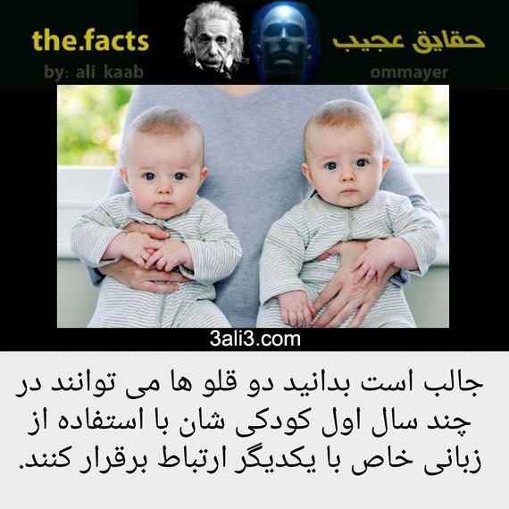 factt (5)