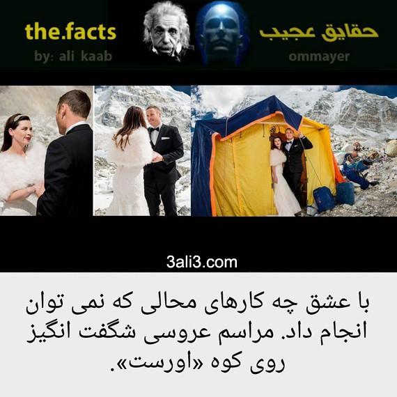 factt (6)