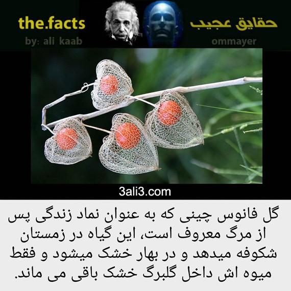 factt (7)