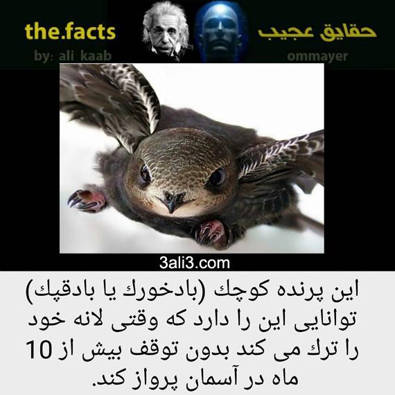 factt (8)