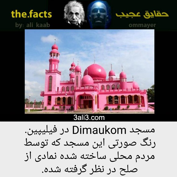 fact (3)