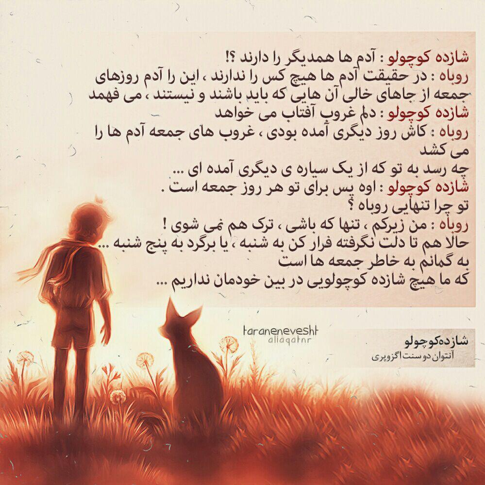 taraneh (5)