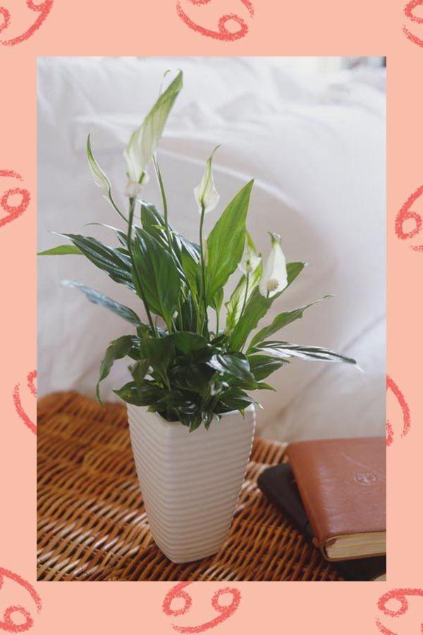 گیاه ماه تولد | گیاه خانگی متناسب با شخصیت متولد هر ماه