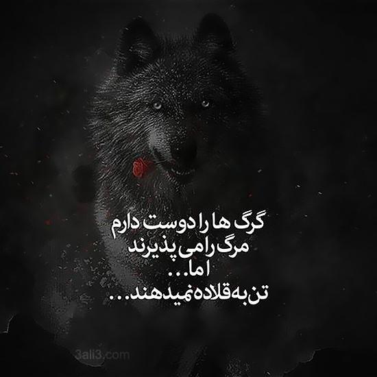 عکس نوشته پروفایل گرگ صفت بودن | کپشن خاص درباره گرگ