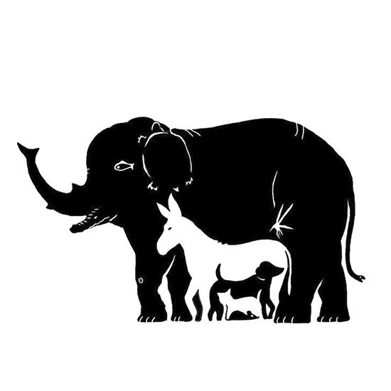 چند حیوان در این تصویر می بینید؟