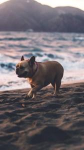 عکس-پس-زمینه-سگ (16)
