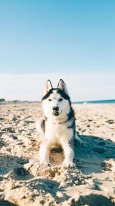 عکس-پس-زمینه-سگ (18)