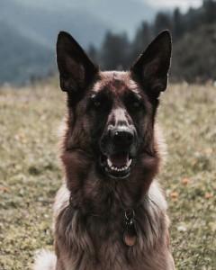 عکس-پس-زمینه-سگ (20)