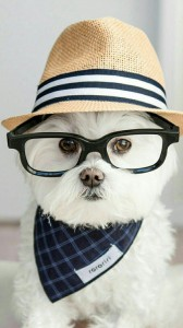 عکس-پس-زمینه-سگ (24)