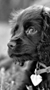 عکس-پس-زمینه-سگ (30)