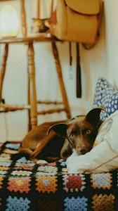 عکس-پس-زمینه-سگ (34)