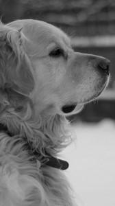 عکس-پس-زمینه-سگ (36)