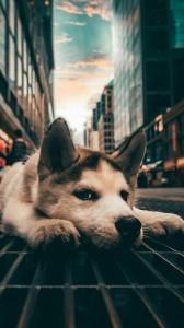 والپیپر زیبای سگ | عکس پس زمینه سگ برای اندروید و آیفون